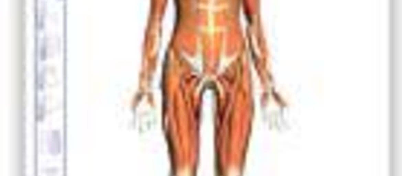 Perfect Google Anatomy Browser Embellishment - Anatomy And ...